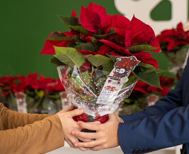 ¡ Nuevo récord! 17.800 flores de Pascua solidarias recaudando más de 35.000€