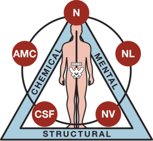kinesiologia applicata cos'è