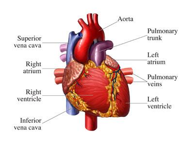 HAARP sustav antene srce
