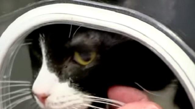 Mačka preživela pranje u veš mašini