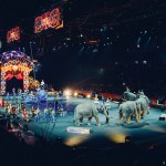 show de circo