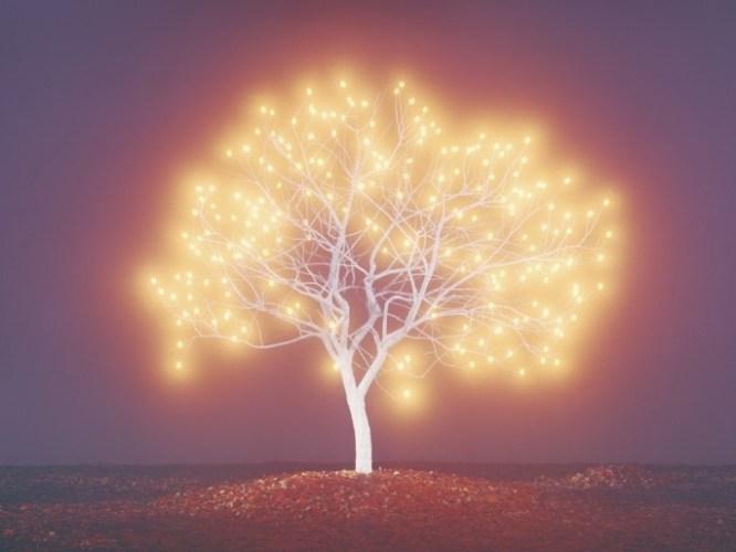 Le chêne aux 70 familles-3