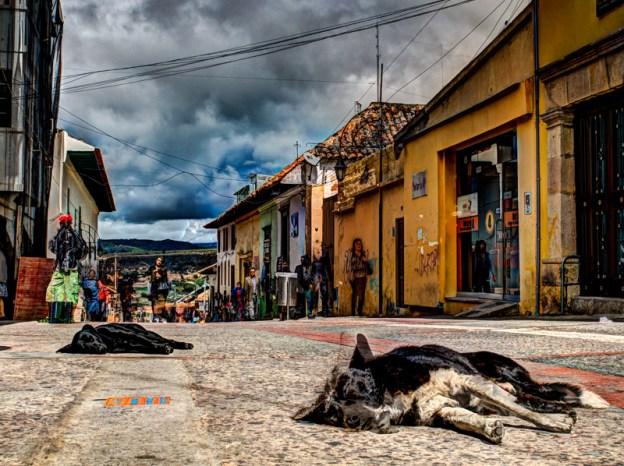 Psy śpiące na ulicach Tunja, podróż Kolumbia