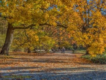 Zdjęcie chodnika zasypanego jesiennymi liśćmi