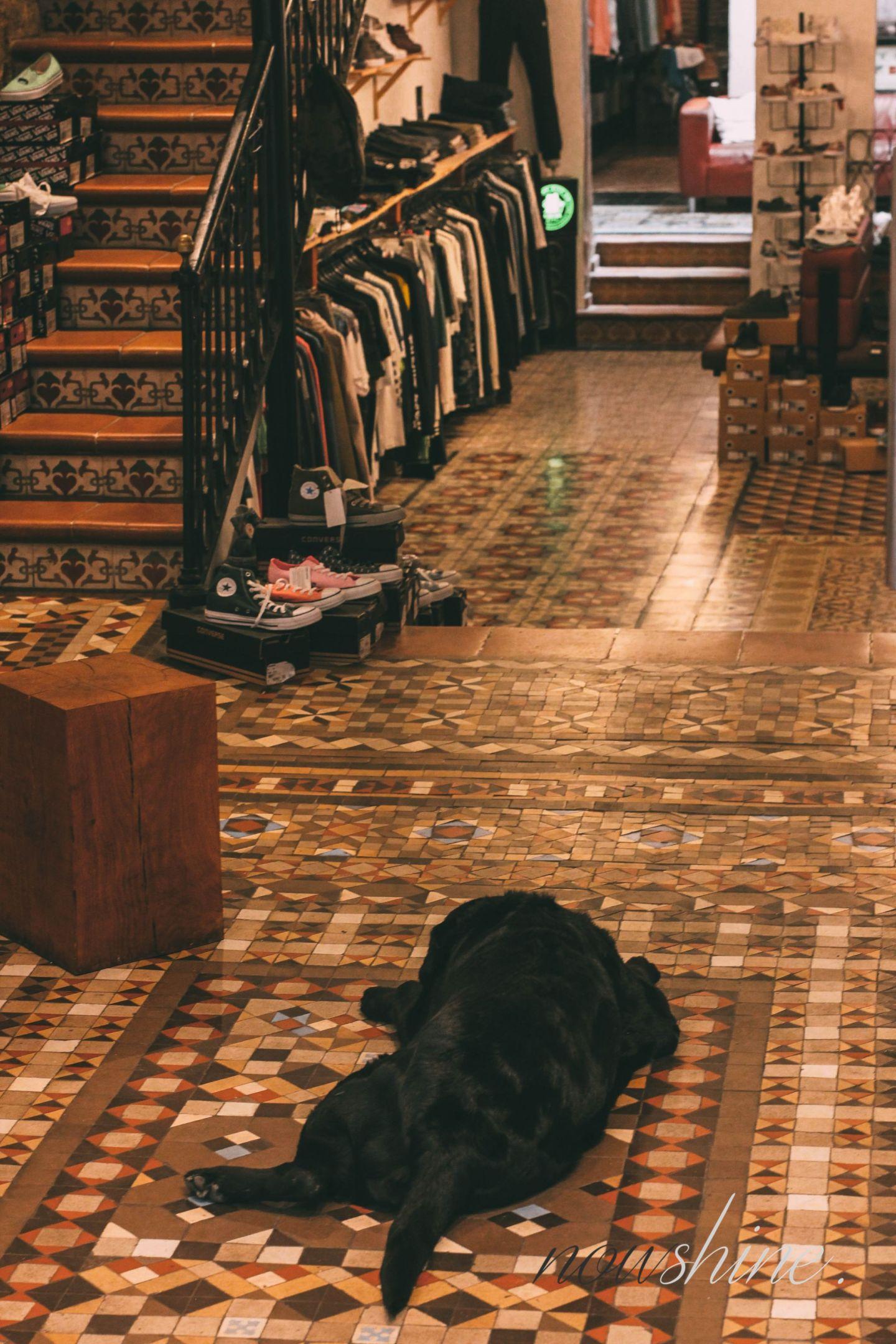 Kurztrip nach Barcelona - Nowshine Reisetipps - Hund im Geschäft