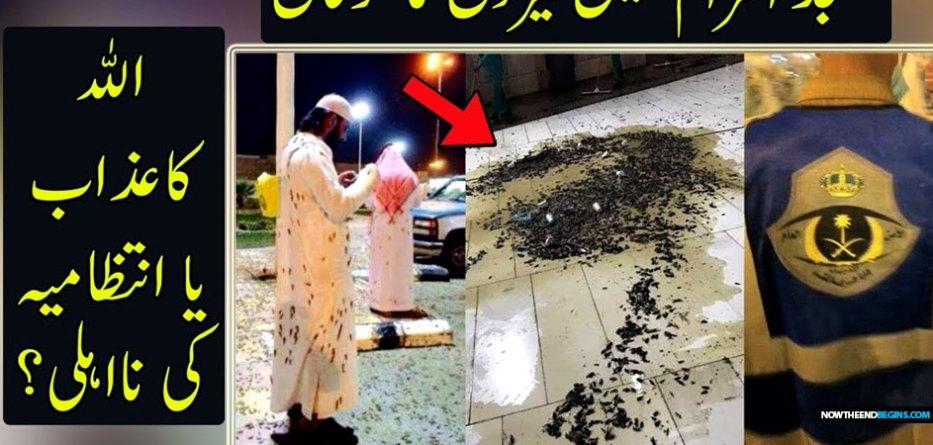 massive-swarm-locusts-mecca-saudi-arabia-muslims-islam-january-2019