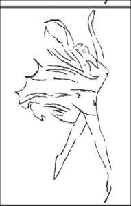 AG Évi'Danse
