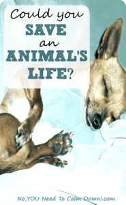 Fostering an animal to save their life. What does it take?