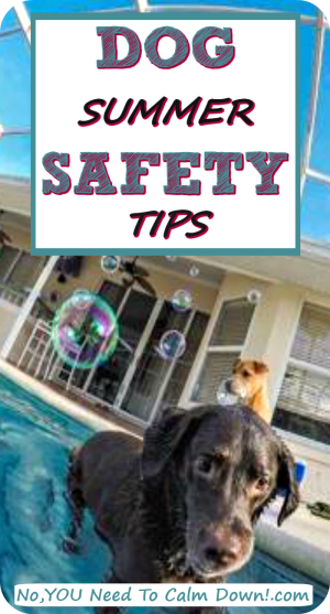 Simple tips to give your dog a safe summer