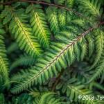 1st Place Plant Life - Ferns by John Adams