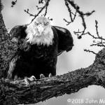 3rd Place Wildlife - Apex Predator by John Mankowski