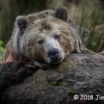3rd Place Wildlife - Wanna Bear Hug? by Jim Heern
