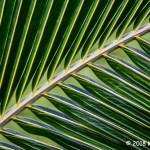 1st Place Plant Life - Palm Pattern by Kim Cuc Tran