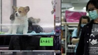 Photo of Κίνα: Άρχισε η απαγόρευση στο κρέας σκύλου και γάτας