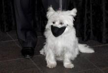 Photo of Κορωνοϊός: Βρέθηκε σκύλος στις ΗΠΑ θετικός στον ιό