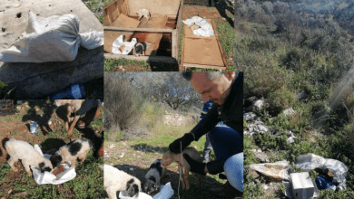Photo of Αγρίνιο: Βρήκε σε τσουβάλι πεταμένα κουτάβια και τους έδωσε…ζωή!
