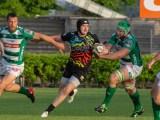 Lo Zebre Rugby Club sfiderà il Benetton Rugby in amichevole a Treviso il 24 Agosto