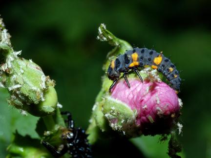 Ladybugs Bandelier National Monument US National Park