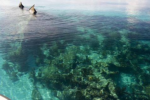 Snorkel And Swim Dry Tortugas National Park US