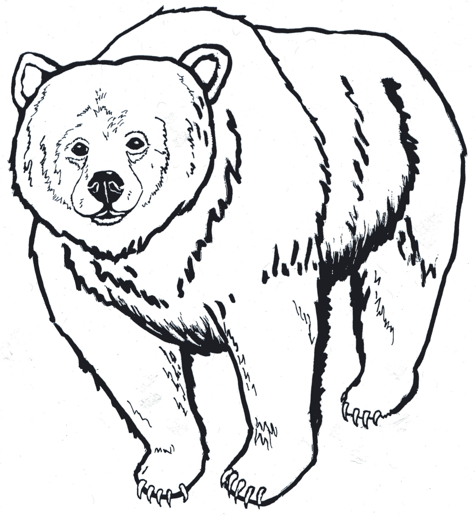 K 3 Unit Four Activity 2 Which Bear