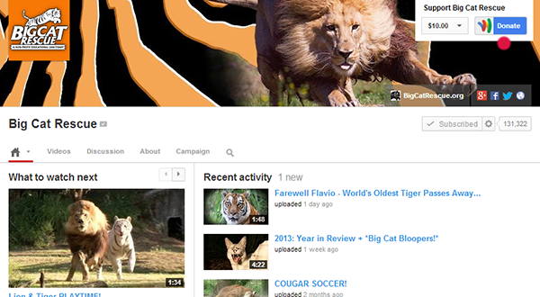 google donate button into youtube channels