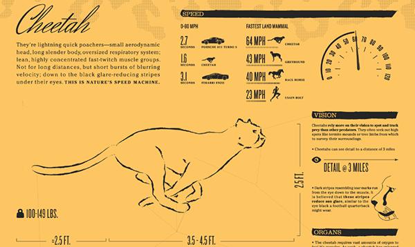 Cheetah Inforgraphic