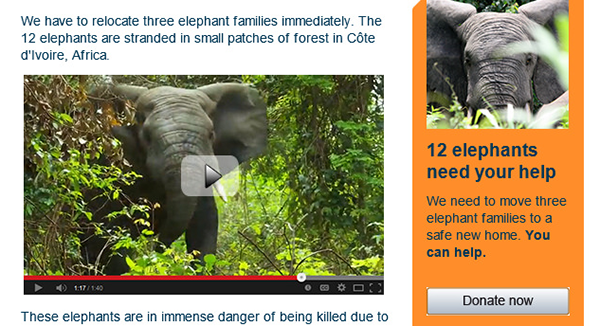 IFAW email