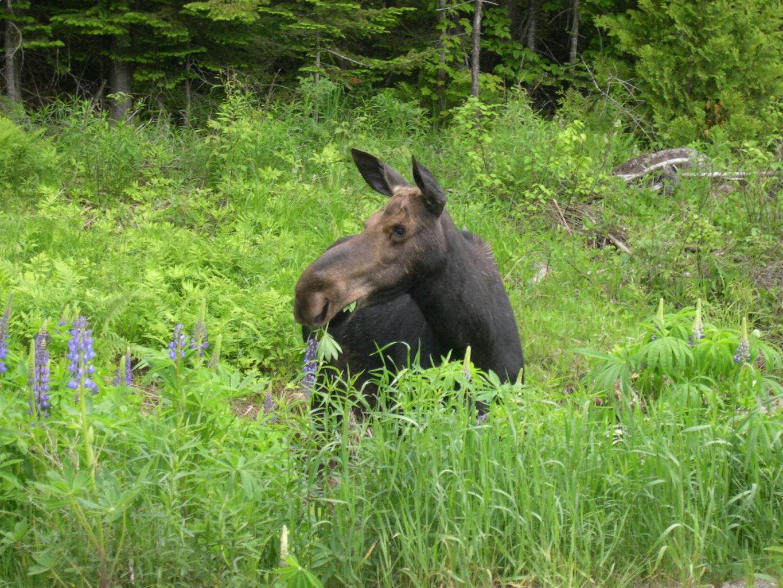 Protecting Maine Wildlife