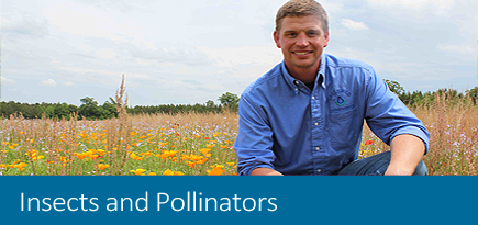 Insects & Pollinators