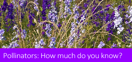 How much do you know about pollinators?