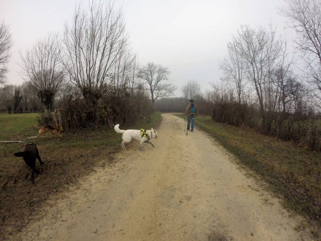 Sortie chiens libres - 18 Décembre 2016 (22)
