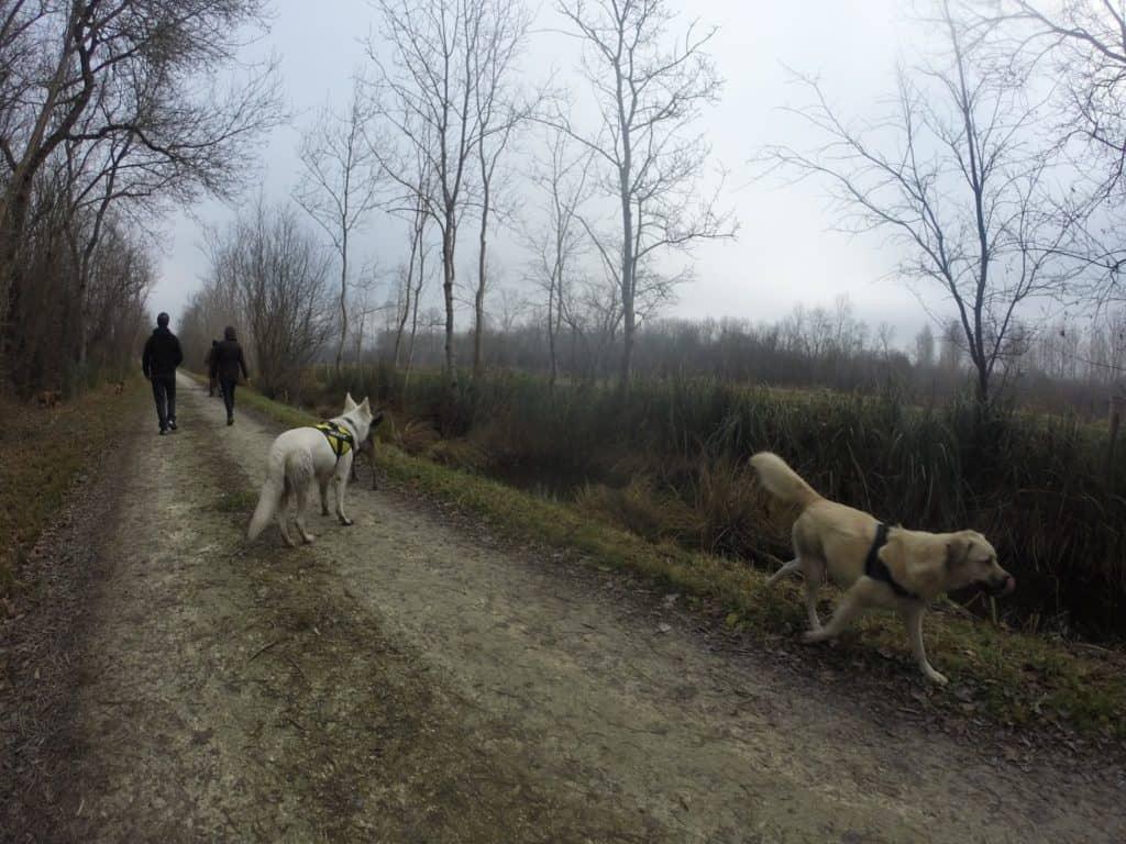 Sortie chiens libres - 18 Décembre 2016 (25)