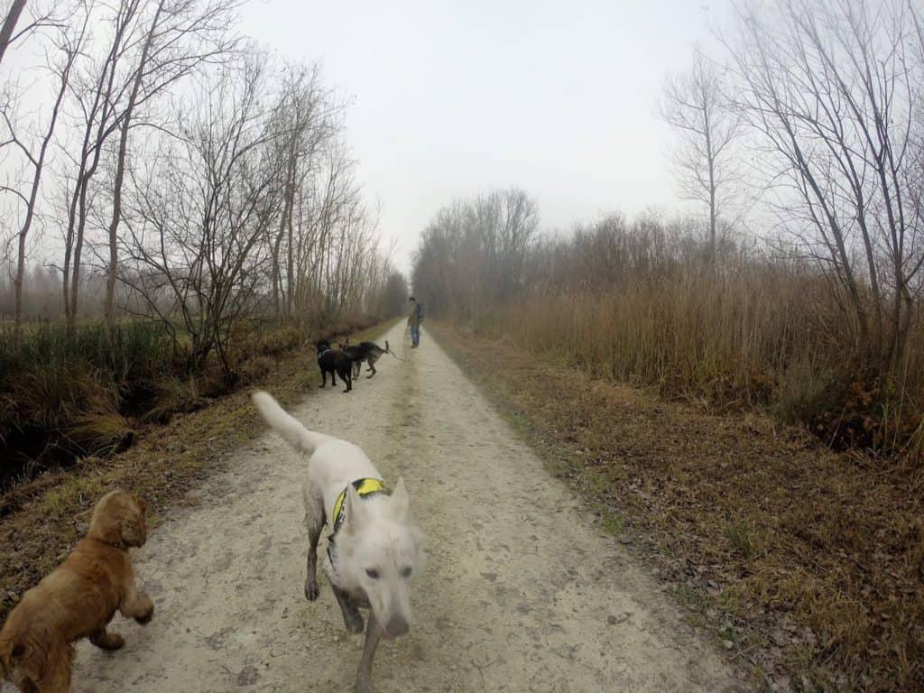 Sortie chiens libres - 18 Décembre 2016 (27)