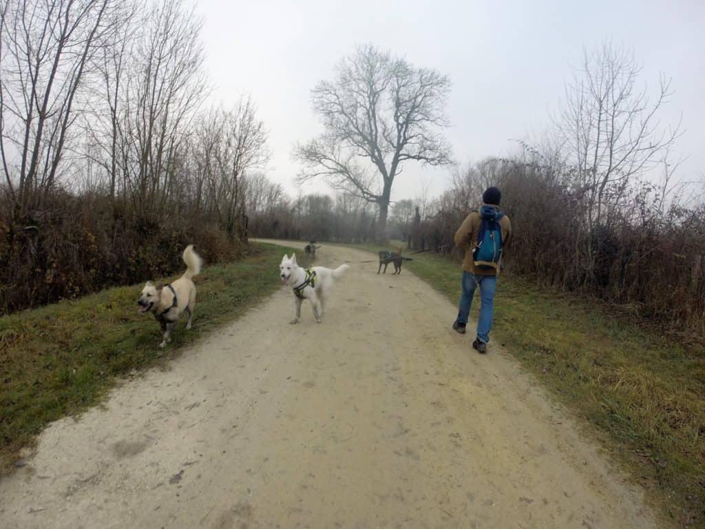 Sortie chiens libres - 18 Décembre 2016 (31)