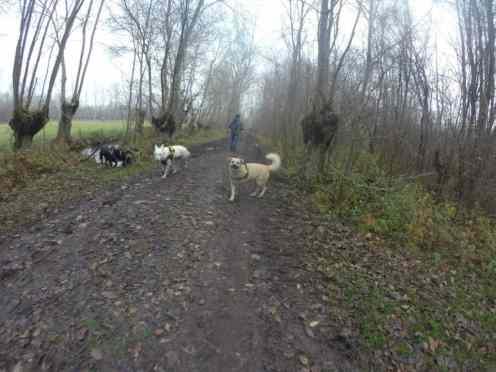 Sortie chiens libres - 18 Décembre 2016 (34)