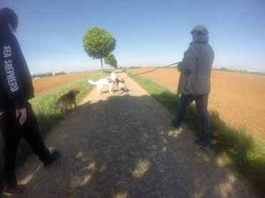 Sortie chiens libres - 23 Avril 2017 (11)