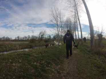 Sortie chiens libres - 26 Mars 2017 (11)