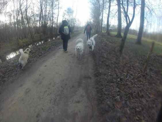 Sortie chiens libres - 29 Janvier 2017 (1)