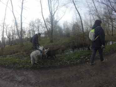 Sortie chiens libres - 29 Janvier 2017 (11)