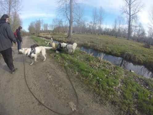 Sortie chiens libres - 29 Janvier 2017 (12)