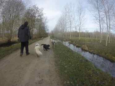 Sortie chiens libres - 29 Janvier 2017 (18)