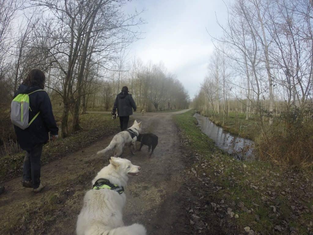 Sortie chiens libres - 29 Janvier 2017 (8)