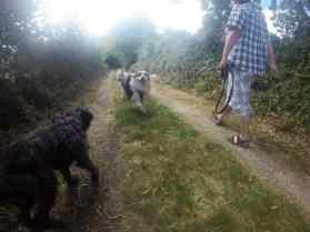 Sortie chiens libres - 25 Juin 2017 (14)