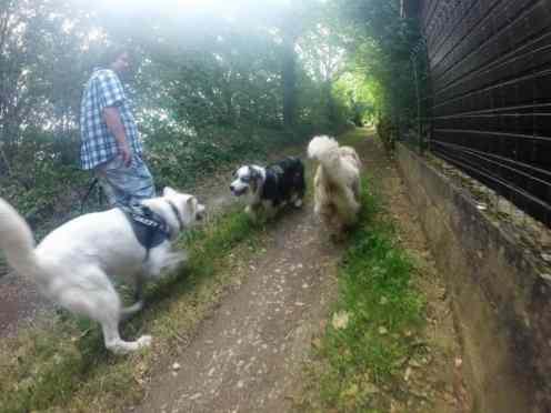 Sortie chiens libres - 25 Juin 2017 (20)