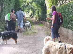 Sortie chiens libres - 25 Juin 2017-Bis (19)