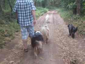 Sortie chiens libres - 25 Juin 2017-Bis (22)