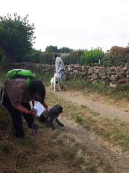 Sortie chiens libres - 25 Juin 2017-Bis (4)