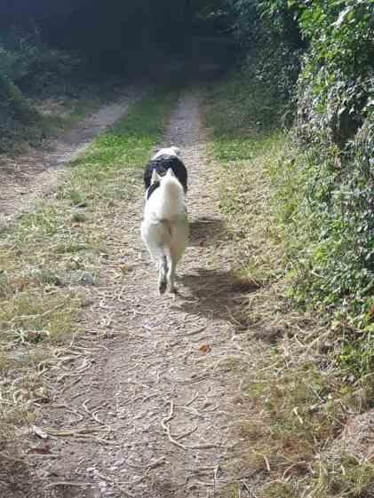 Sortie chiens libres - 25 Juin 2017-Bis (6)
