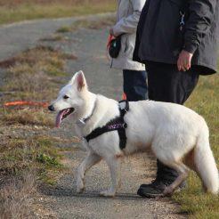 Sortie chiens libres - 19 Novembre 2017 (9)