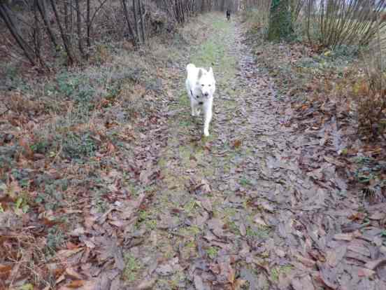 Sortie chiens libres - 17 Décembre 2017 (10)